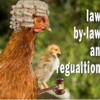 Keeping Chickens: Laws, By-Laws and Regulations in the UK