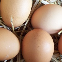 Selling Eggs in the UK – What You Need To Know