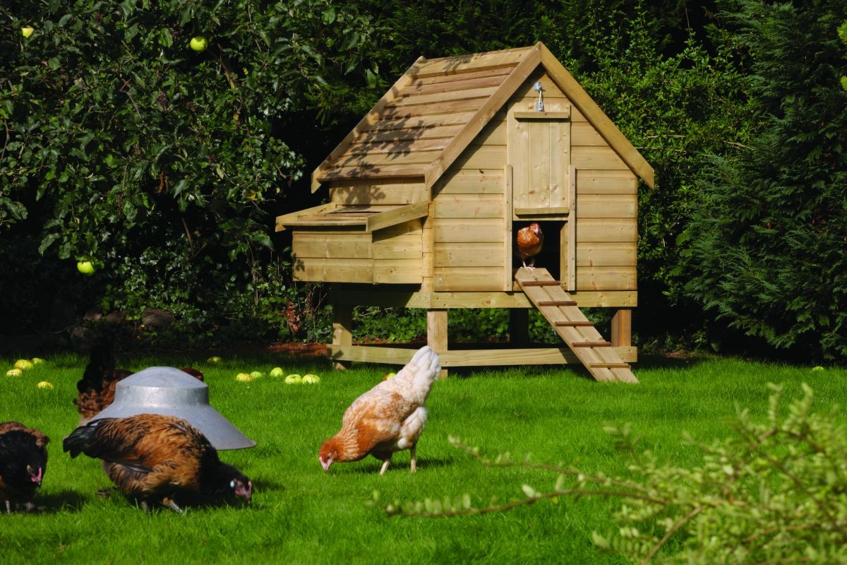 Rowlinson large chicken coop review for 6 hens keeping chickens uk - Comment construire un poulailler ...