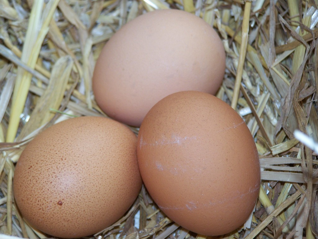 How to get chickens to lay eggs in nesting box