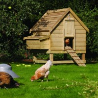 Rowlinson Large Chicken Coop Review (for 6 Hens)